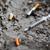 füme · sigara · popo · zemin · sigara · içme - stok fotoğraf © dolgachov