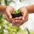 kezek · föld · növény · mutat · növekedés · fa - stock fotó © dolgachov