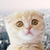 close up of scottish fold kitten over city stock photo © dolgachov