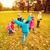 felice · bambini · giocare · parco · infanzia - foto d'archivio © dolgachov