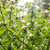 güzel · elma · ağacı · şube · doğa - stok fotoğraf © dolgachov