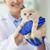 close up of vet with scottish kitten at clinic stock photo © dolgachov