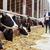 gazda · csőr · nyáj · tehenek · csoport · farm - stock fotó © dolgachov