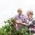 casal · de · idosos · colheita · groselha · verão · jardim · orgânico - foto stock © dolgachov