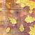 szett · különböző · őszi · levelek · izolált · fehér - stock fotó © dolgachov