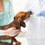 kutya · orális · higiénia · arany · merő · fajta - stock fotó © dolgachov