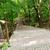 erdő · ösvény · lépcsősor · kopott · fa · út - stock fotó © dolgachov
