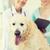 счастливым · врач · ретривер · собака · ветеринар · клинике - Сток-фото © dolgachov