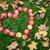 otono · acción · de · gracias · día · frutas · alimentos · fondo - foto stock © dolgachov