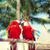 волнистый · попугайчик · пару · довольно · птиц · глаза · любви - Сток-фото © dolgachov