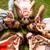grup · çim · daire · eğlence · Avrupa · gülen - stok fotoğraf © dolgachov