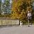 gelukkig · man · labrador · hond · lopen · buitenshuis - stockfoto © dolgachov
