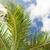palmboom · blauwe · hemel · witte · wolken · vakantie · natuur - stockfoto © dolgachov