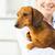 uśmiechnięty · lekarza · psa · portret · kliniki · uśmiech - zdjęcia stock © dolgachov
