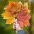 женщину · лист · рук · природы - Сток-фото © dolgachov