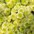 belo · flor · céu · inverno · natureza · jardim - foto stock © dolgachov