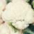 キャベツ · カリフラワー · 市場 · 新鮮な · ダイエット - ストックフォト © dolgachov