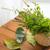 hojas · primer · plano · rústico · mesa · de · madera · casa - foto stock © dolgachov