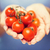 close up of woman holding cherry tomatoes in hands stock photo © dolgachov