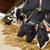 rebanho · vacas · alimentação · feno · laticínio · fazenda - foto stock © dolgachov