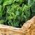 зеленый · рассада · плодородный · почвы · завода · шаблон - Сток-фото © dolgachov