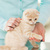 faible · chaton · main · humaine · sweet · chat · tête - photo stock © dolgachov