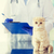 close up of vet with clipboard and cat at clinic stock photo © dolgachov