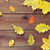 automne · layout · blanche · espace · texture · nature - photo stock © dolgachov