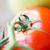 kırmızı · domates · şube · siyah · plastik - stok fotoğraf © dolgachov