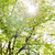 árvore · folhas · horrível · seca - foto stock © dolgachov