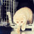 kedi · kutu · gizleme · köpek · doğa · hayvan - stok fotoğraf © dolgachov