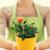 femme · mains · roses · Bush - photo stock © dolgachov
