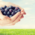close up of woman hands holding blueberries stock photo © dolgachov