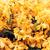 美しい · フィールド · テクスチャ · ガーデニング · 植物学 - ストックフォト © dolgachov
