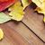 ingesteld · verschillend · bladeren · geïsoleerd · witte - stockfoto © dolgachov