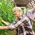 yaşlı · adam · domates · yukarı · çiftlik · sera - stok fotoğraf © dolgachov