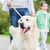 close up of family with labrador dog in park stock photo © dolgachov