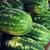 close up of watermelon at street farmers market stock photo © dolgachov