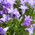 синий · красоту · букет · ярко - Сток-фото © dolgachov