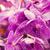 rózsaszín · virágzó · orchidea · gyönyörű · üvegház · virág - stock fotó © dolgachov