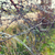 barb wire fence over gray sky stock photo © dolgachov