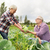 casal · de · idosos · jardinagem · juntos · casal · retrato · asiático - foto stock © dolgachov