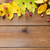 ingesteld · vruchten · bessen · hout · natuur - stockfoto © dolgachov