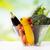 közelkép · érett · zöldségek · üveg · tál · asztal - stock fotó © dolgachov