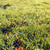 erba · verde · rugiada · natura · stagione · ambiente - foto d'archivio © dolgachov