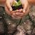 femme · semis · augmenté · sol · mains - photo stock © dolgachov