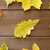 veel · verschillend · natuur · seizoen - stockfoto © dolgachov