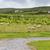 sheep grazing on field of connemara in ireland stock photo © dolgachov