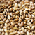 malta · cereales · agricultura - foto stock © dolgachov