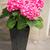 ピンク · 咲く · マクロ · クローズアップ · ショット - ストックフォト © dolgachov